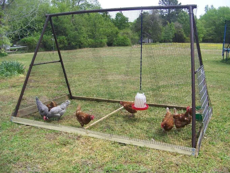 Клетки для цыплят своими руками: размеры, чертежи 77